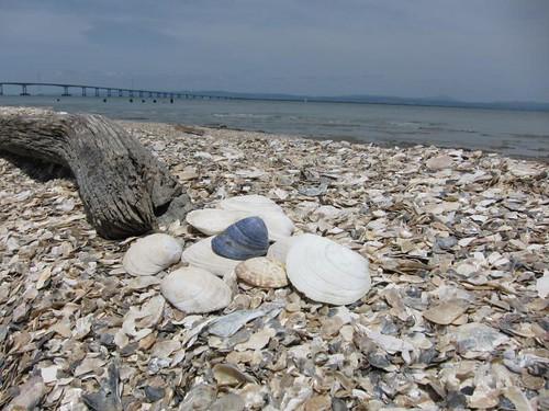 Shell Beach IMG_5929