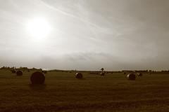 Parma Countryside