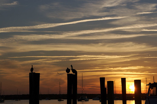 sunset pelicans dock waterfront stmarys 2007photos