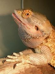 Lizard again(^_^;)
