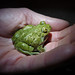 Western Spadefoot - Photo (c) randomtruth, some rights reserved (CC BY-NC-SA)