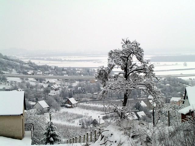 a harkányi szőlőhegy / snowy vineyard