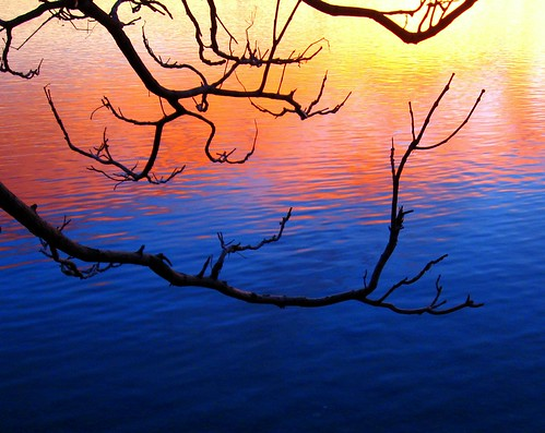 morning blue orange color reflection tree water sunrise river washington branch ripple columbia reflect reflexions richland spselection anawesomeshot diamondclassphotographer