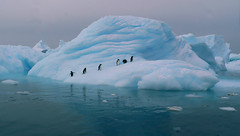 arctic ocean, arctic, glacial landform, melting, ice cap, polar ice cap, ice, wind wave, sea ice, freezing, iceberg,