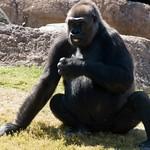 Los Angeles Zoo 084