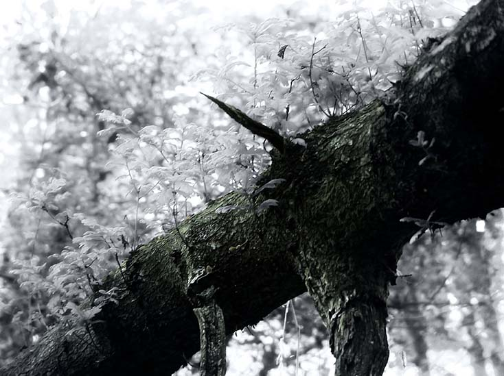 Photography - Branch Growth by Nicholas M Vivian