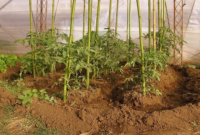 Photo Plantas de invernadero
