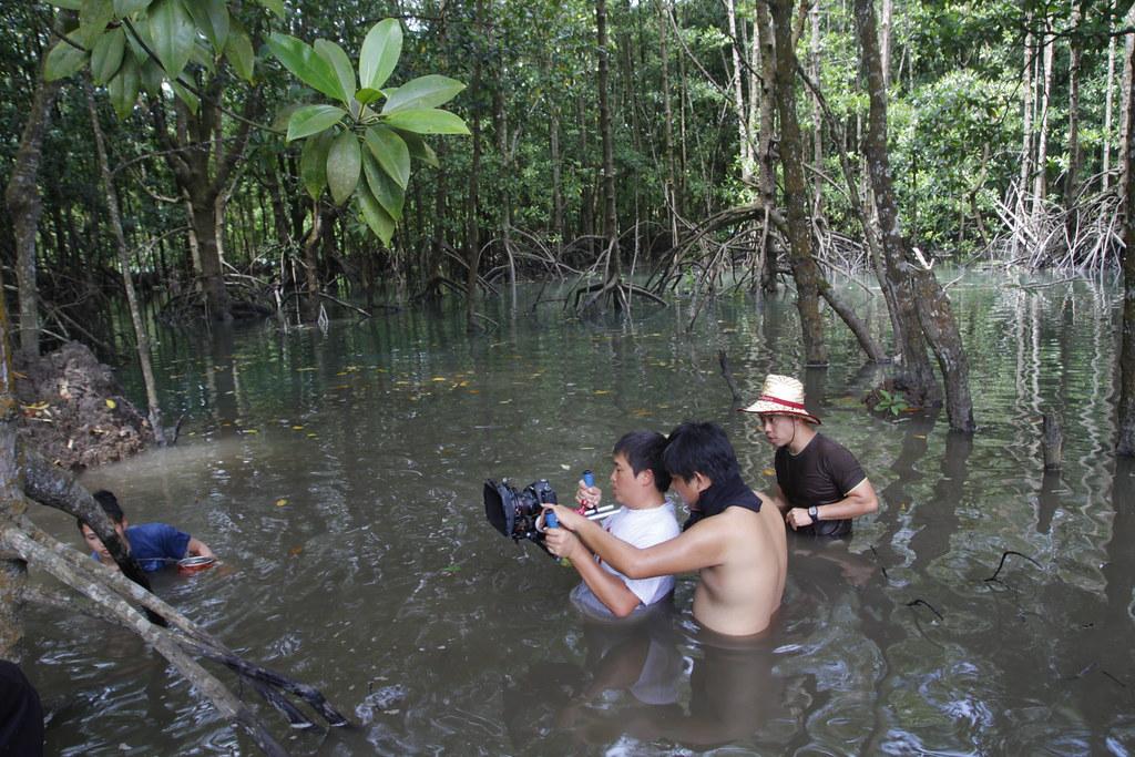Mangrove tour at Cherating, Pahang