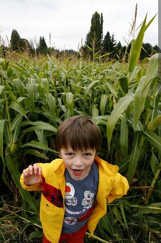 children of the corn    MG 4426
