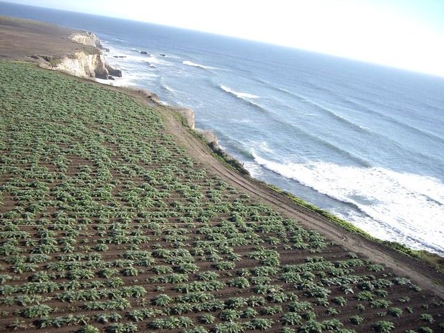 aerial photo of a farm field adjacent to the shore