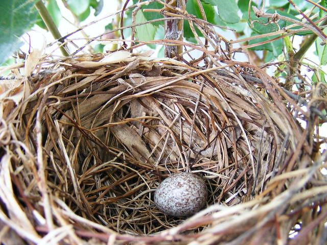 red bird nest and - photo #2
