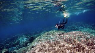 Floating in emerald sea iii (GBR)