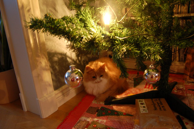 Smilla under the Tree