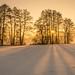 Golden winter light by hjuengst