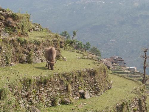 nepal 223