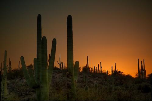 arizona cactus sunrise landscape desert saguaro flickrelite mygearandme mygearandmepremium mygearandmebronze mygearandmesilver mygearandmegold