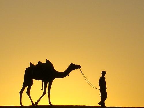 travel sunset india landscape photo asia desert camel photograph jaisalmer rajasthan southasia 印度 thardesert
