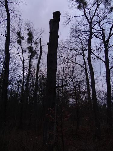 Haut mit dem Beil den Eichenstamm aus dem Wald bei Dresden und Hülle, die Fülle, die Menge 00582