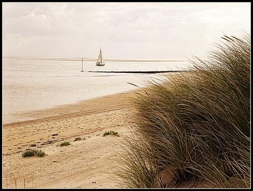 vlieland thenetherlands greatshot artcafe mywinners adriënne windsandandwater amazingamateur macromarvels worldglobalaward addyvanrooij beachwearnewgroup lovelymotherearth