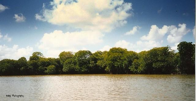 Pichavaram - Mangrove Forest