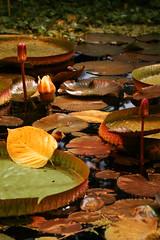 Floral pool