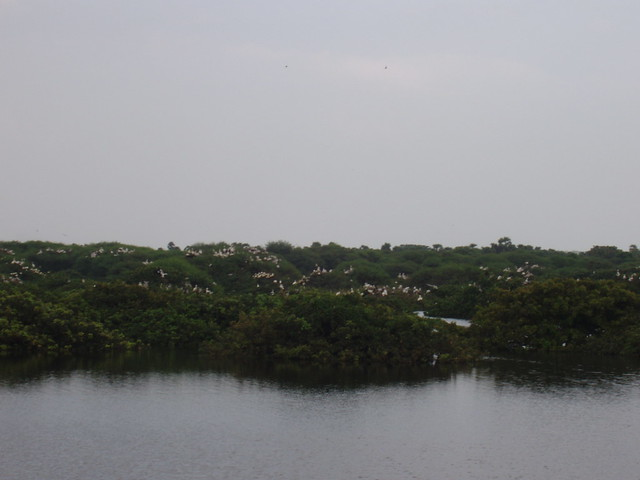 Vedantangal Bird Sanctuary