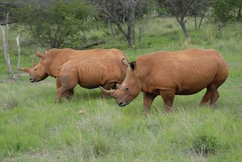 Suedafrika_Dez2007_02_AntsNest_1509