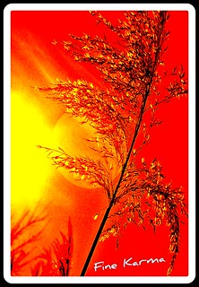 EffiArT .:. sunset in march with backlight .:. red and yellow compo. EffiArt,Karma