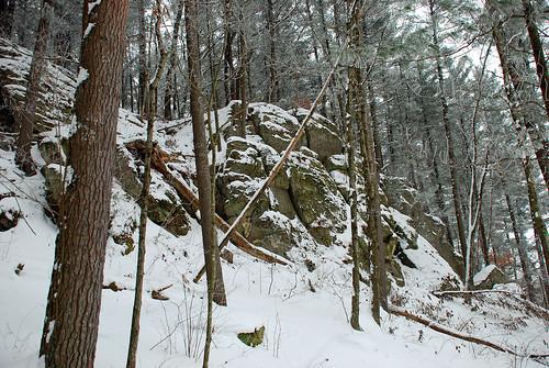 Pine Trees 3