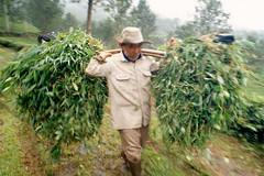 food(0.0), crop(0.0), plantation(0.0), agriculture(1.0), shrub(1.0), field(1.0), tree(1.0), plant(1.0), gardener(1.0), harvest(1.0), produce(1.0), farmworker(1.0),
