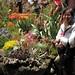 2008 San Francisco Flower & Garden Show (Mar 2008)