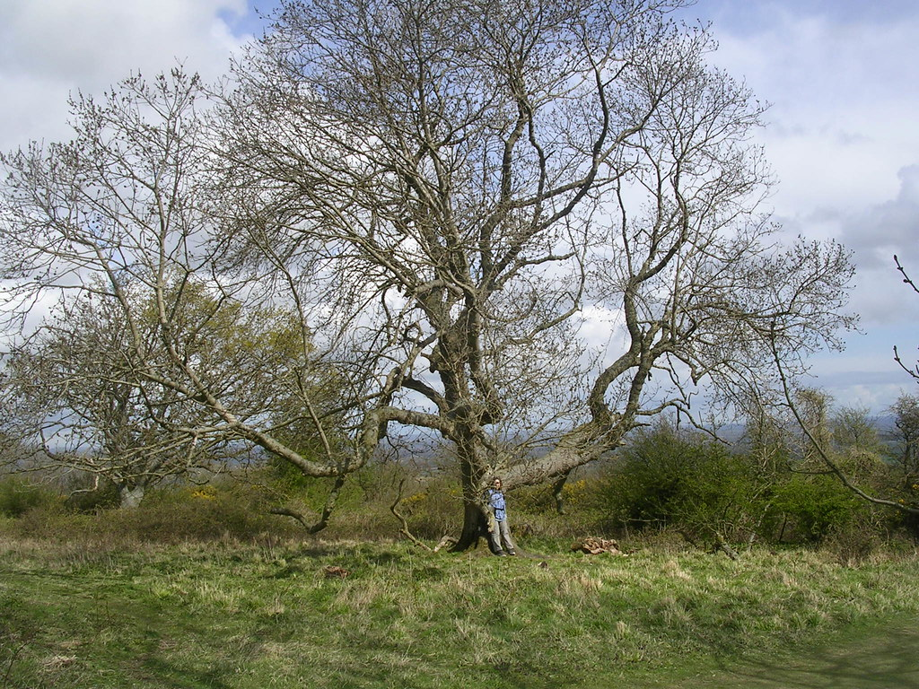 Big Tree Hassocks to Lewes