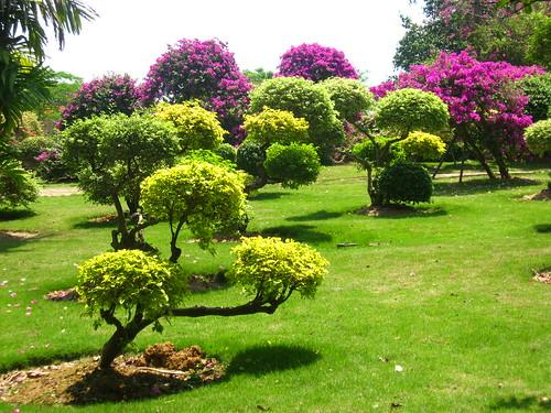 Relatos de una mochila jardines y selvas en banna for Jardines naturales