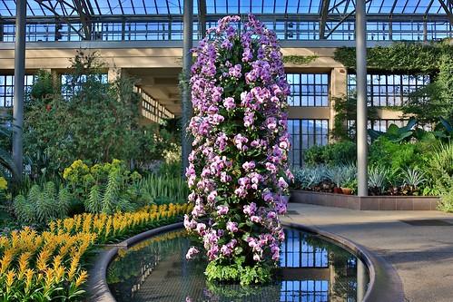 longwood gardens kennett square botanical garden park plant flower orchid phalaenopsis