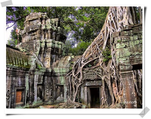 Ta Phrom(塔普倫寺)