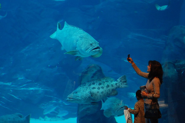 Georgia Aquarium by CC user hyku on Flickr