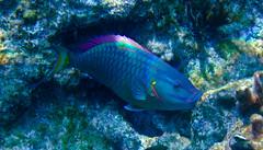 Stuart Cove's Snorkel Bahamas