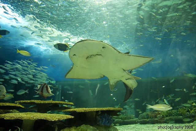 Manila Ocean Park Pool Shark Flickr Photo Sharing
