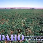 Idaho Potato Farm  Flickr  Photo Sharing