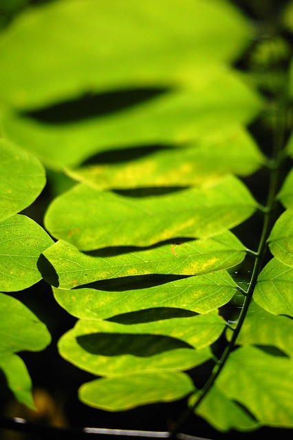 Vert et Verdure