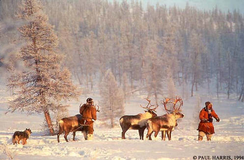 Winter reindeer herders