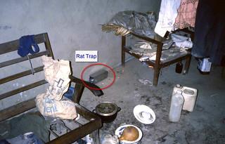 Lassa fever investigation: rat trap in place