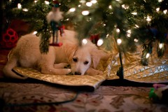 Puppies under the tree by Robert L Parker