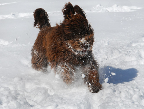 Cinna flying through the snow with ease
