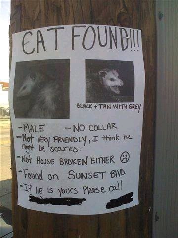 Anyone lose a cat? Cat Found? Lost Cat? Only in LA