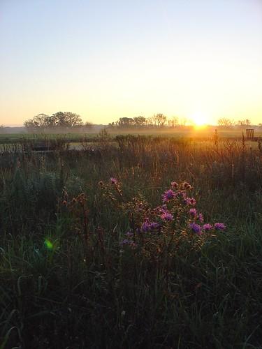 flowers sunrise landscape botanical anniversary hotairballoon stillwater