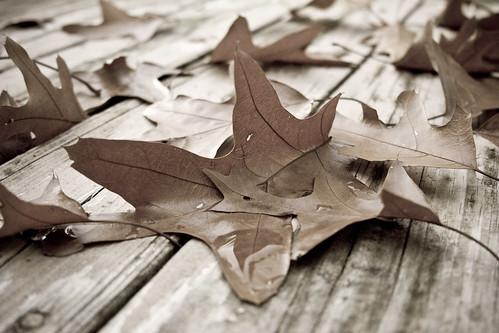 autumn wallpaper ny fall home leaves leaf october myfav deck pittsford 2007 lightroom agedphoto homerandom bushnellsbasin canon40d