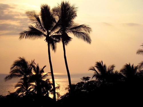 ocean sunset landscape hawaii silhouettes palmtrees exotic hawaiiansunset bigisland tropics kailuakona canonixus850is platinumphoto