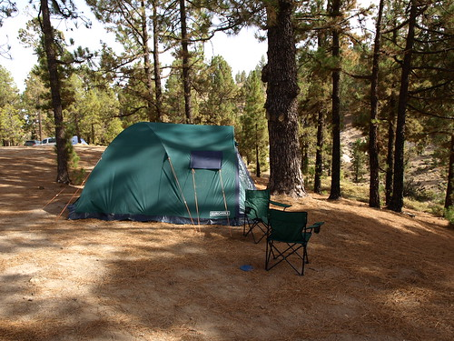 Camping in Tenerife's Pine Forest