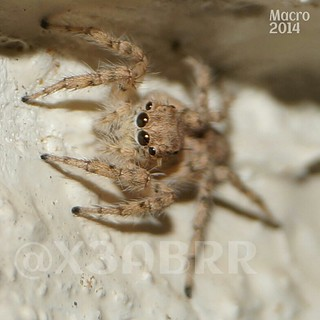 #macro #2014 #camera #sony #a57 #animals  #animal